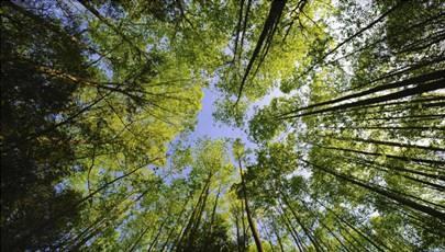 CINE DEBAT : 2 films forêt et construction bois